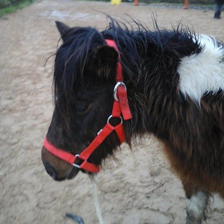 chevaux-vendu